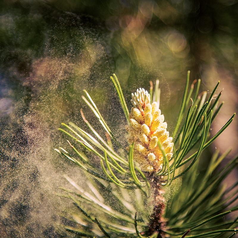 Sporen & Pollen